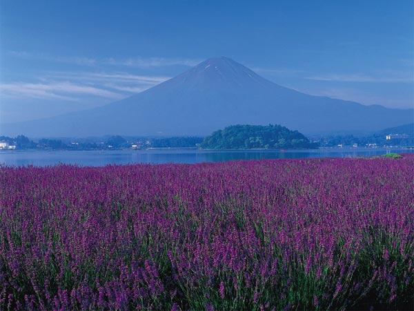 Núi Phú Sĩ in bóng xuống mặt nước hồ Shoji.